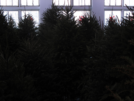 image of Christmas trees filling a gallery